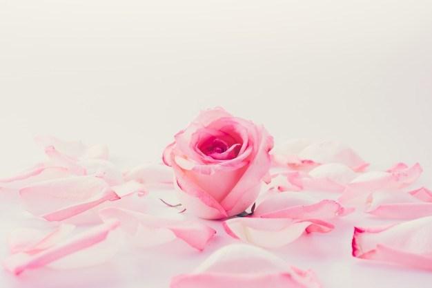 Où trouver des pétales de rose ?