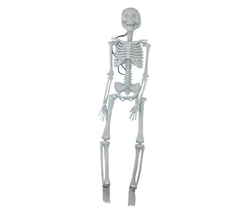 Squelette réaliste 42,5cm
